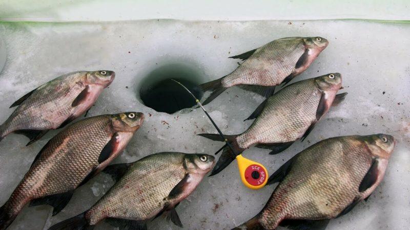 Готовимся к лещовой рыбалке. Эффективная прикормка