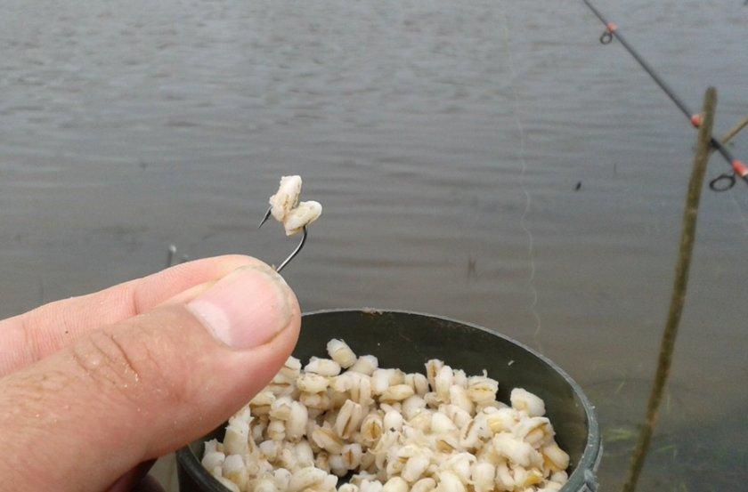Секрет приготовления перловки для рыбалки