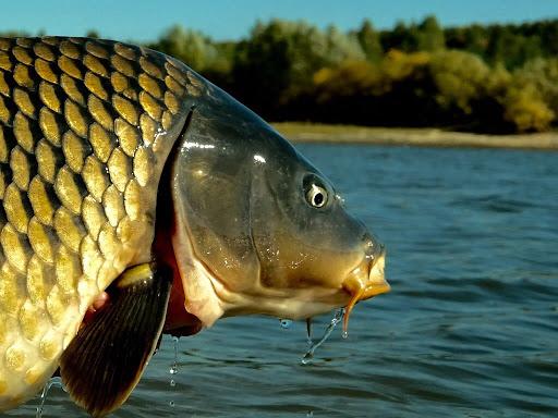 Карповая ловля летом. Советы начинающим рыболовам