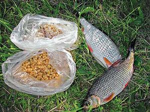 Наживки растительного происхождения для рыбной ловли