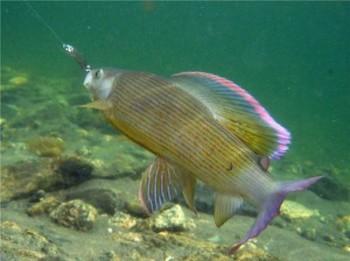 Рыбы Ямала