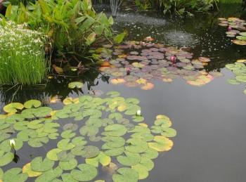 Водные растения и рыбы