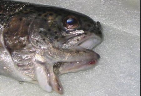 уродства у рыб
