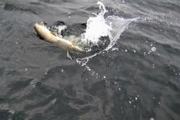 Ловля щуки в холодной воде