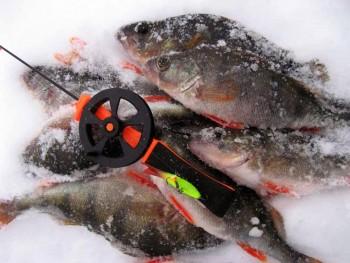 Ловля окуня по последнему льду