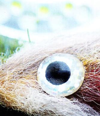 2д глаз