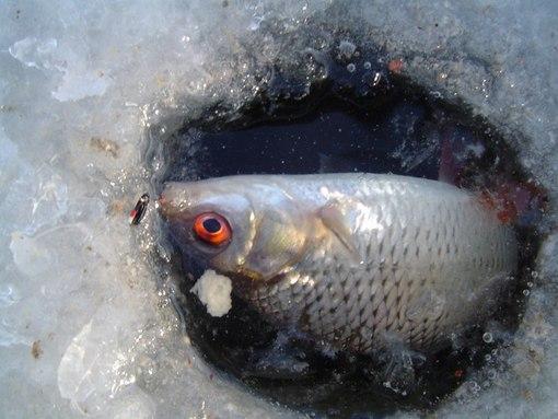 Ловля в устьях малых рек по первому льду