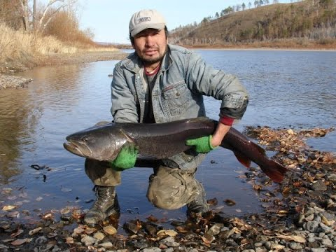 Рыбалка на реке Онон