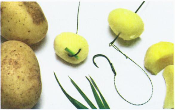 Ловля нехищных рыб на картофель