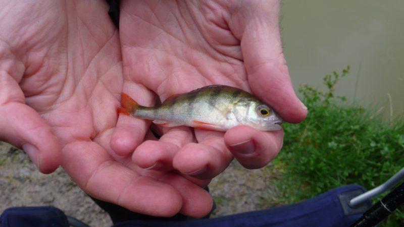 Взаимосвязь между возрастом и размером рыб