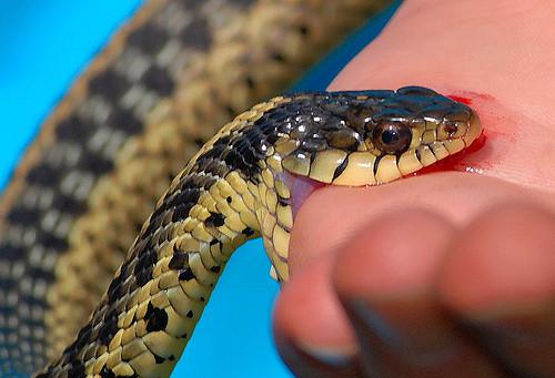 Ядовитые змеи и защита от них