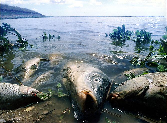 Экологические проблемы Ладоги