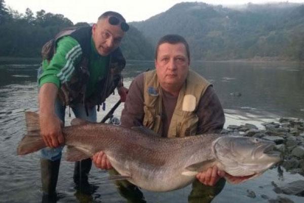 Дунайский лосось