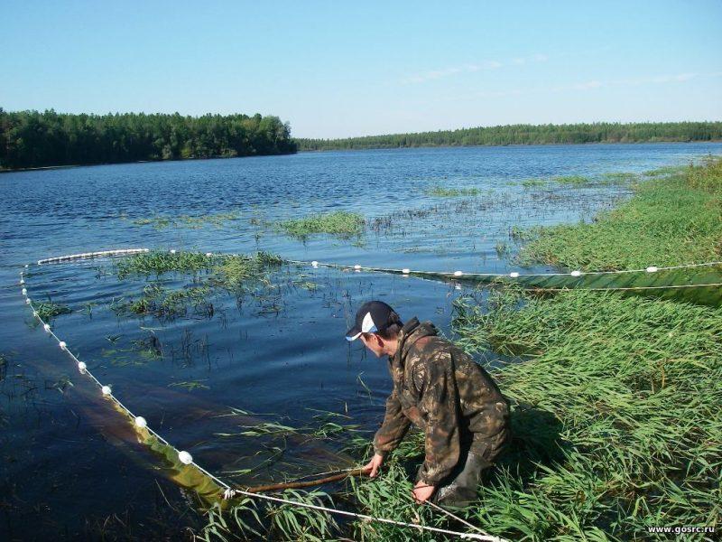 Мониторинг водоемов и ихтиофауны