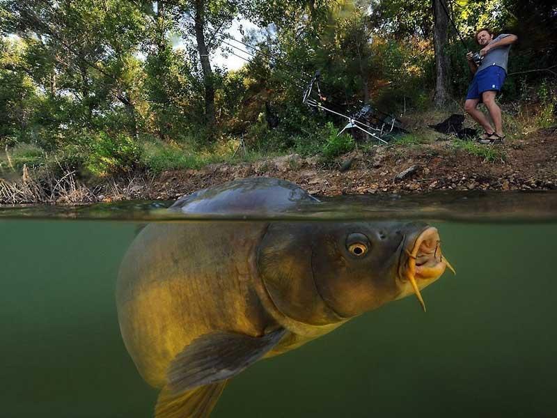 Переход рыбы на летнее время