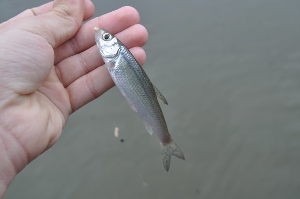 Рыбалка во время запрета