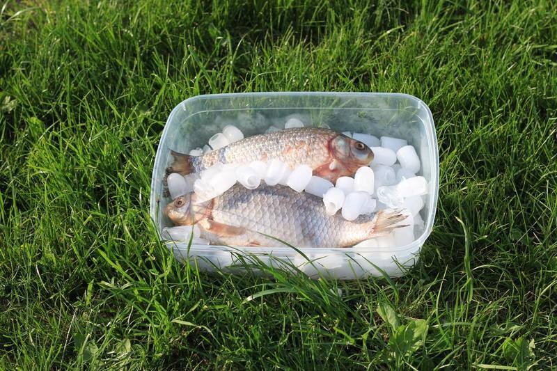 Как жарким летом сохранить улов свежим
