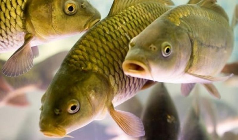 Как общаются рыбы?