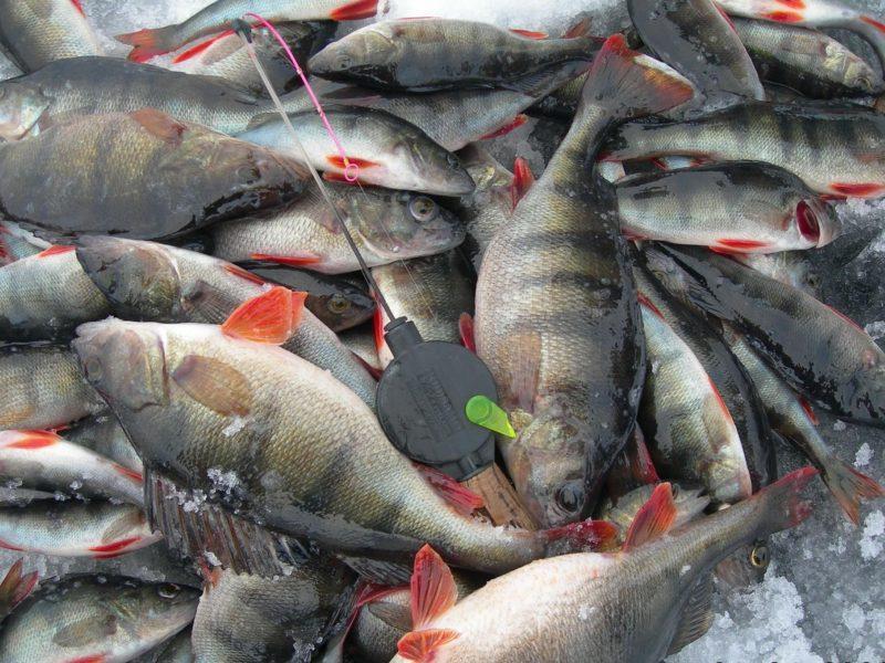 Секрет рыболова. Реально ли взять не берущую рыбу