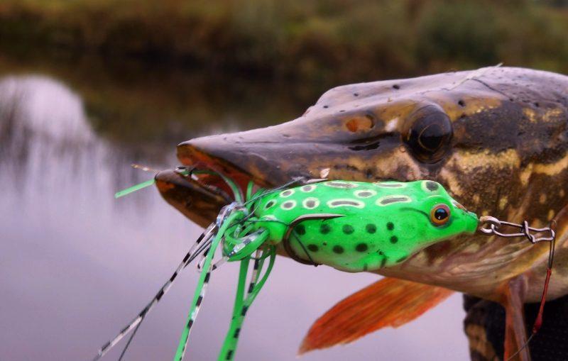 Силиконовые лягушки – любимый деликатес щук