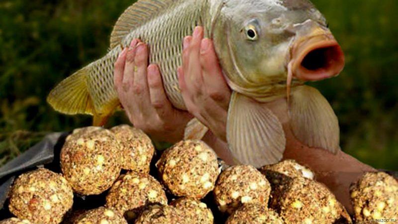 О количестве прикормки на рыбалке