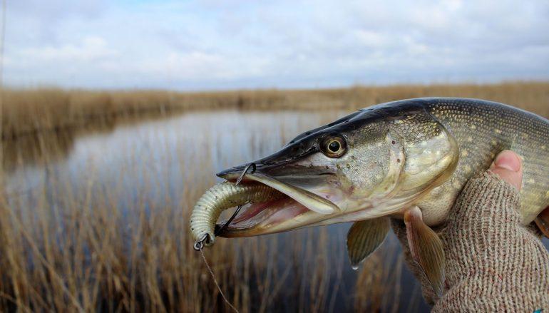 Несколько слов о спиннинговой ловле щуки с берега