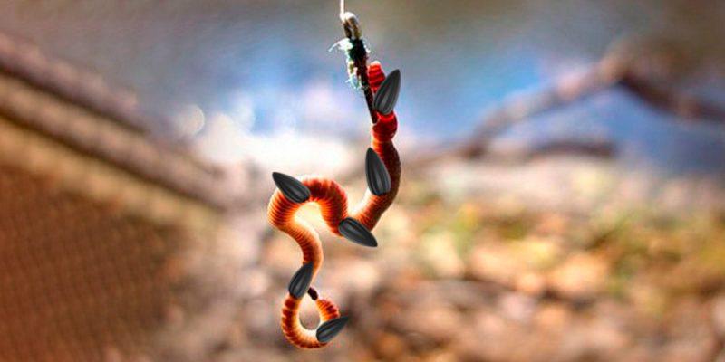 Черви в семечках. Рецепт приманки от опытного рыболова