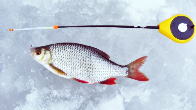 Зимняя поплавочная снасть для ловли красноперки