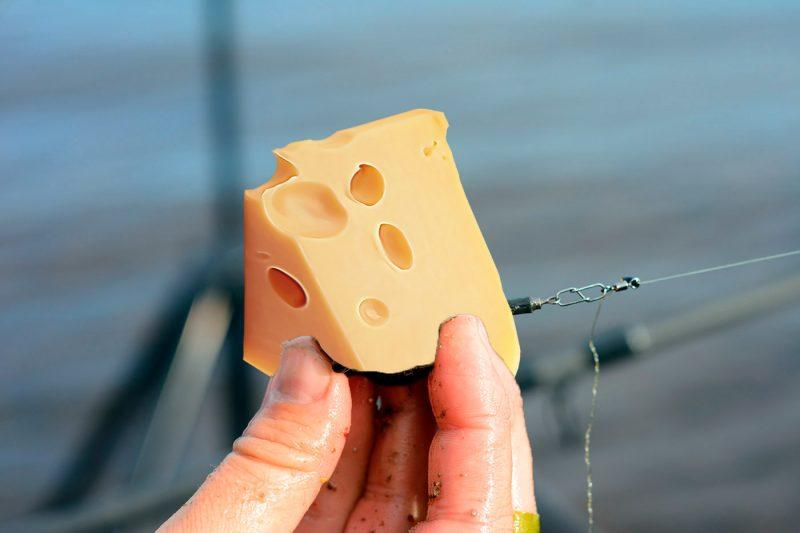 Ловля рыбы на сыр