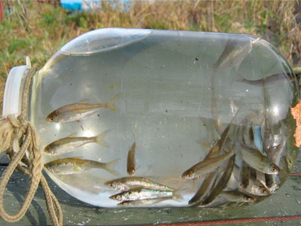 Как зимой приманить рыбу