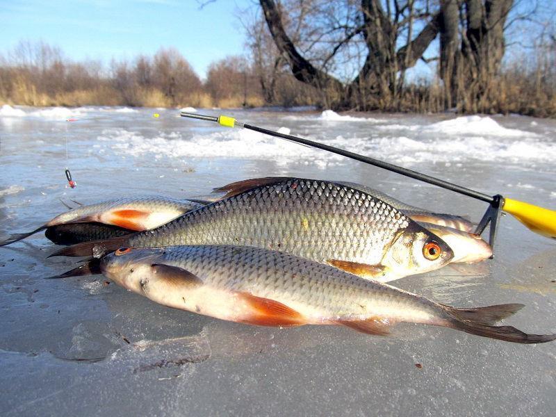Оснастка удочки для ловли плотвы в зимний период