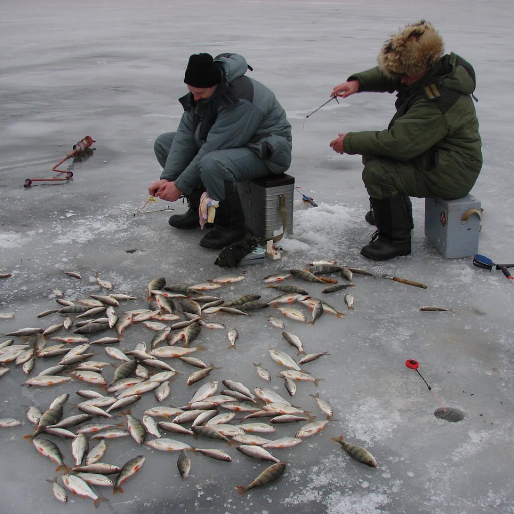 Какие наживки взять с собой на зимнюю рыбалку