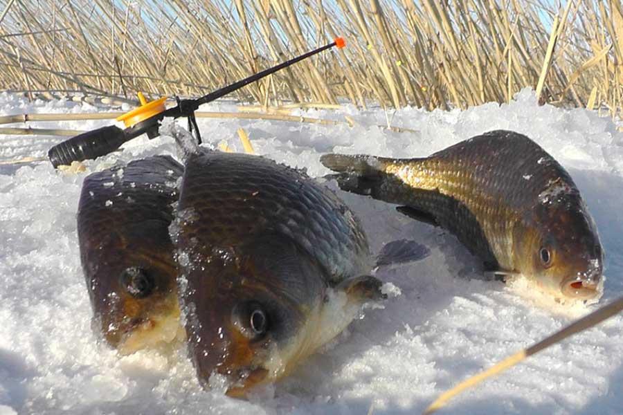 Снасти для ловли карася зимой