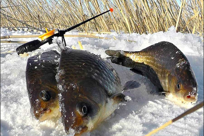 3 зимних правила успешного рыболова