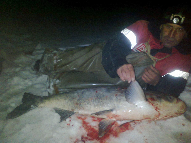 Ловля толстолобика зимой со льда