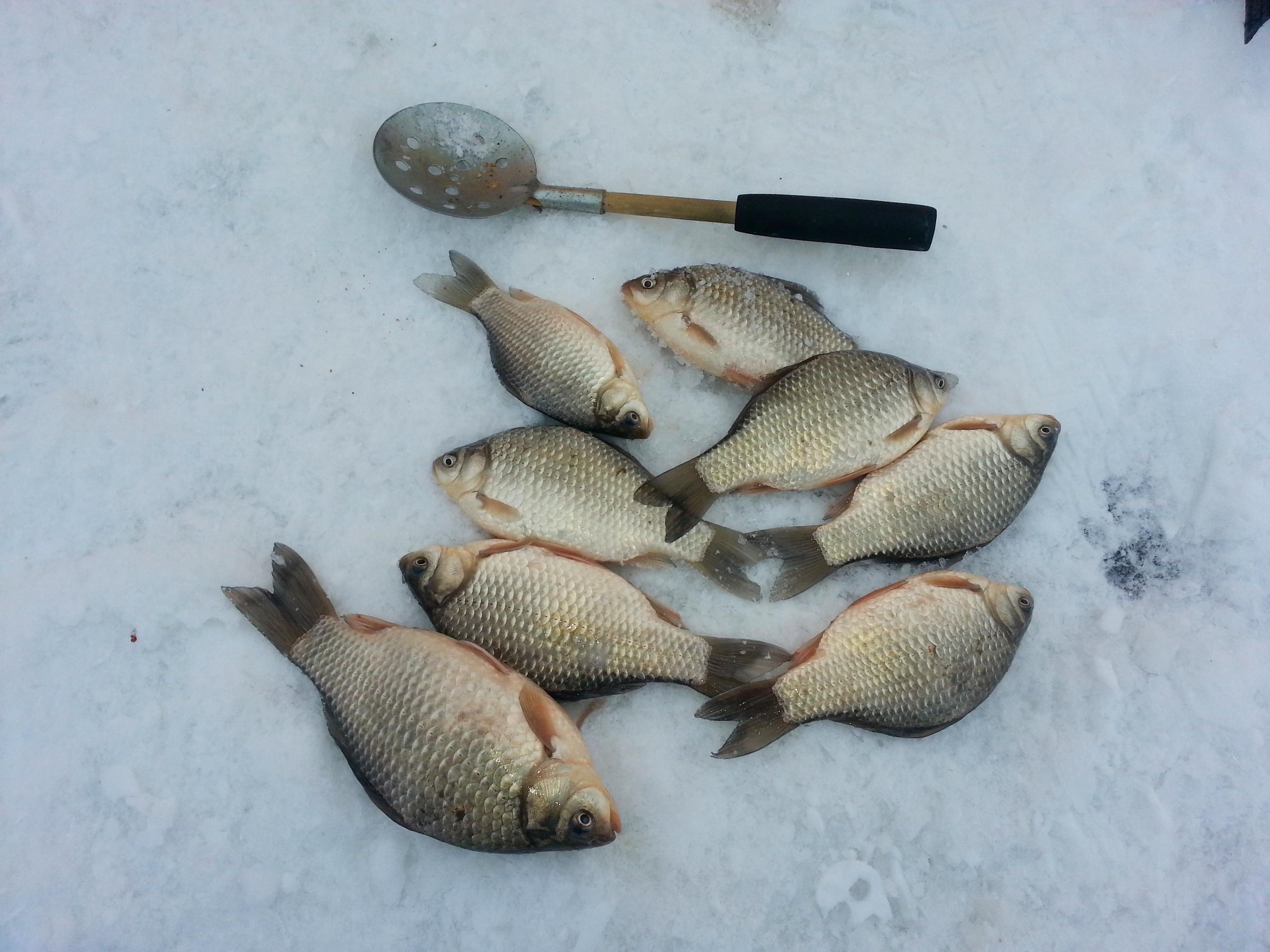 Успешная ловля карася зимой, советы и рекомендации