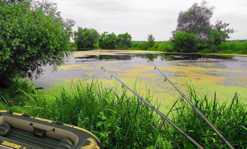 Как ловить рыбу летом в ряске