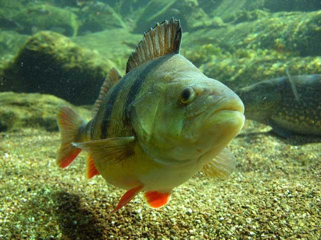 Как определить видовой состав рыбы в небольших водоемах по первым минутам рыбалки