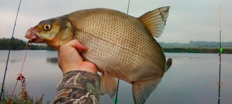Весенняя рыбалка. Наживки для леща