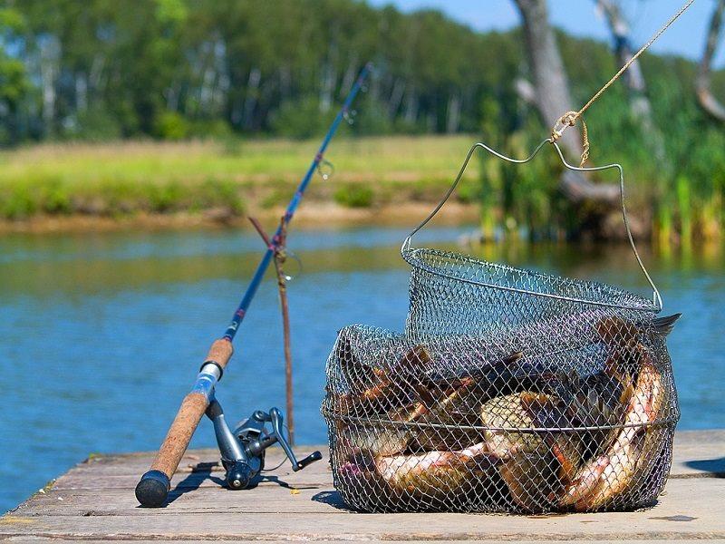 Пойманная рыба. Сохраняем улов свежим