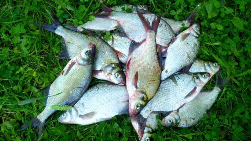 Секреты успешной рыбалки на подлещика в августе