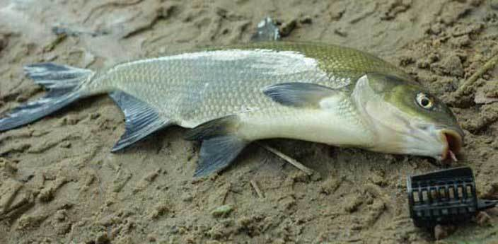 Прикормка для фидерной рыбалки на леща