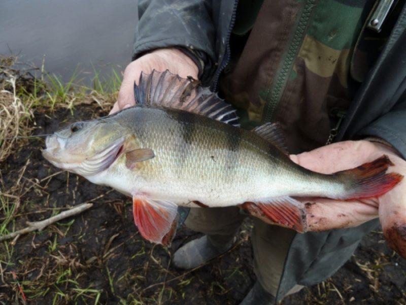 Рыбалка на окуня в пруду