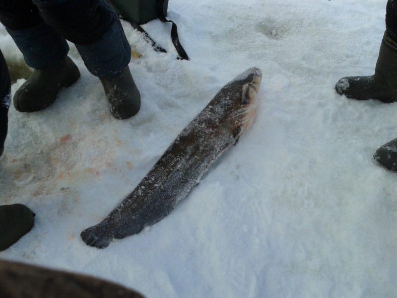 Зимняя рыбалка на сома