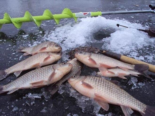 Ловля карася в начале зимы