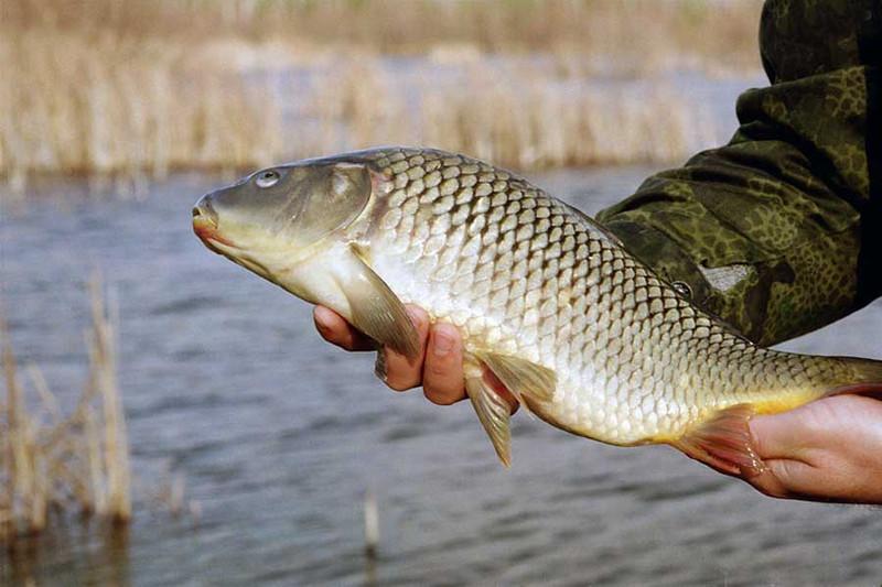 Ловля карпа в ноябре: особенности рыбалки