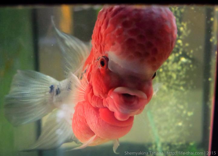 Умеют ли рыбы разговаривать? Кто как «говорит»