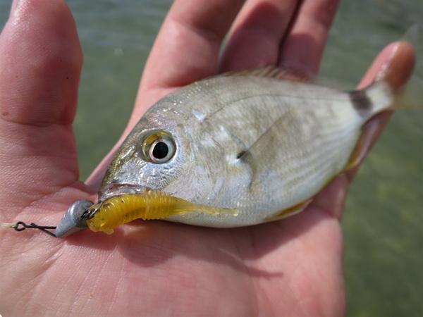 Особенности джиговой ловли рыбы на море