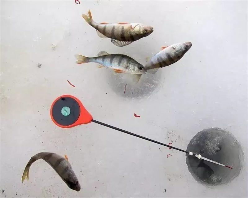 Заставим окуня клюнуть. Что делать, если рыба закрыла рот?