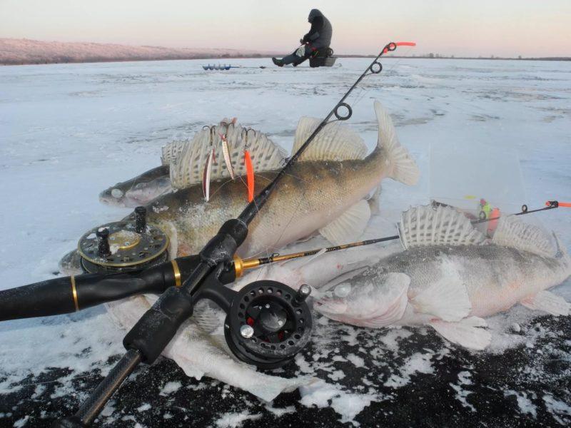 Поймать судака зимней ночью – не проблема!